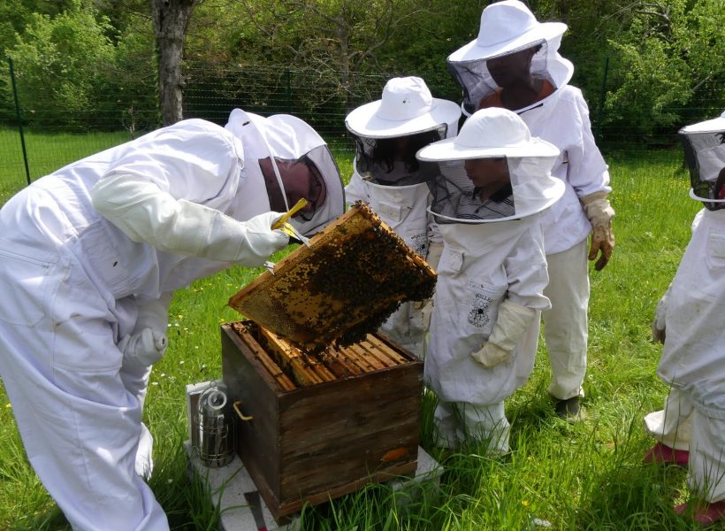 Inspection des ruches