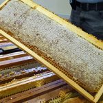 cadre plein de miel