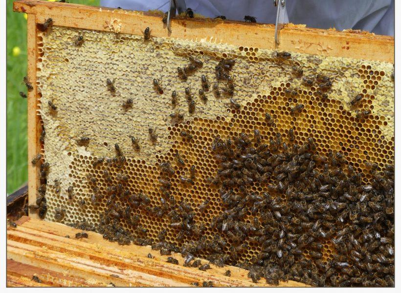 Cadre de réserves de miel