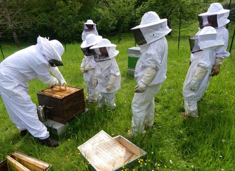 inspection des ruches et ajout des hausses le 8 mai