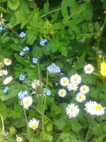 Fleurs-des-allees