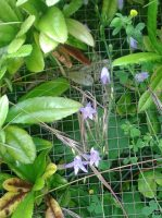 Fleurs-des-allees2