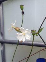 Fleurs-des-allees3