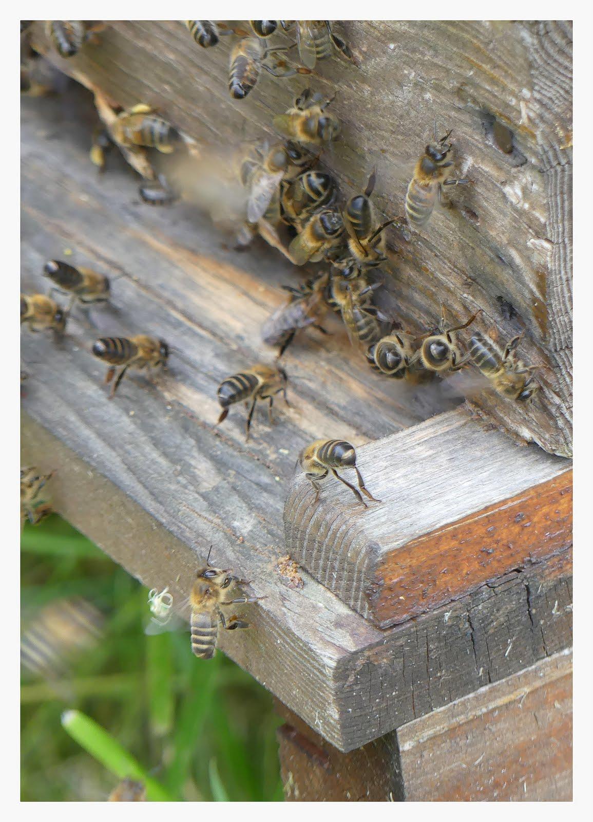 les abeilles battent le rappel
