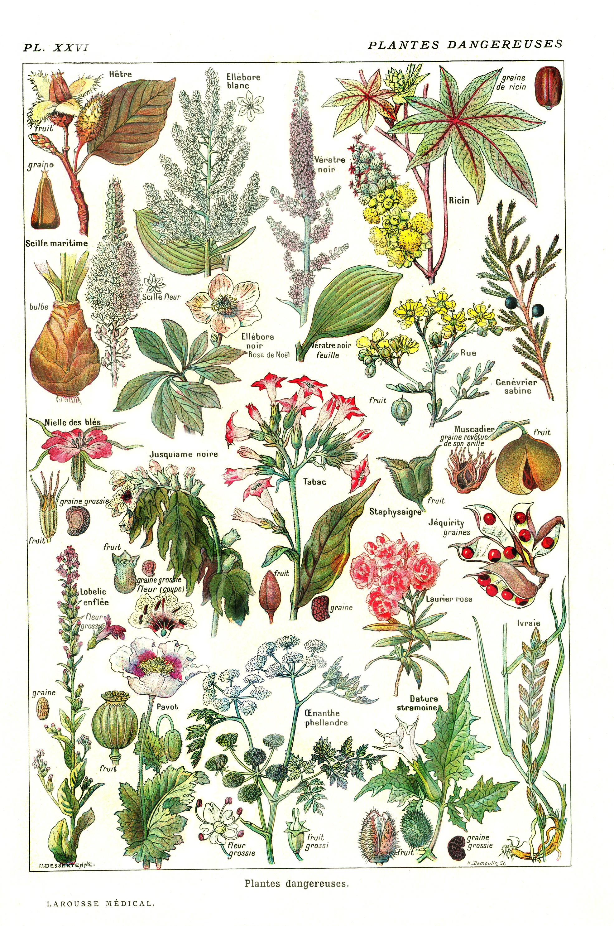 plantes dangereuses