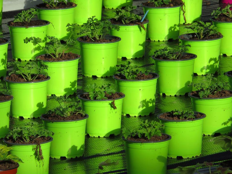 Troc aux plantes AJFCC